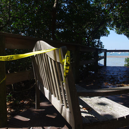 http://selby.org/wp-content/uploads/mangrove-boardwalk.jpg