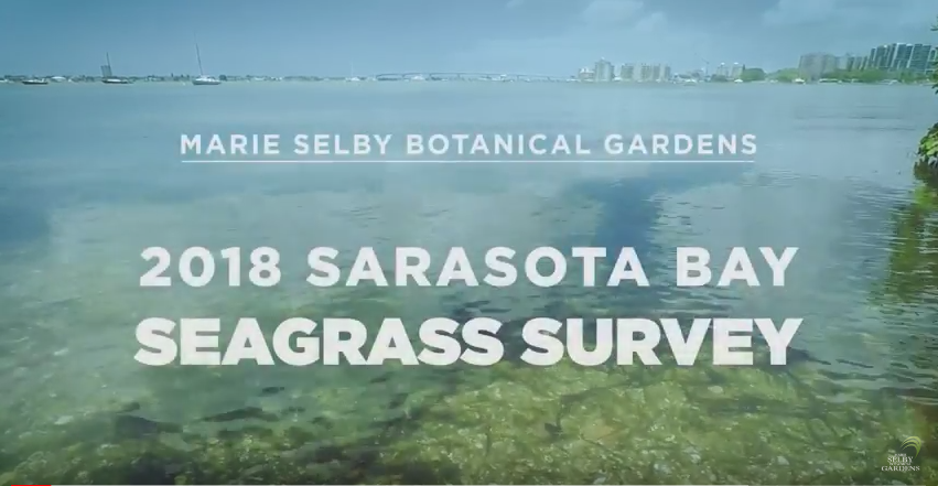 Selby Gardens Participates in Annual Sarasota Bay Seagrass Survey