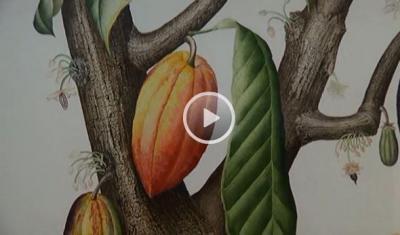 The Art of Botanical Illustration