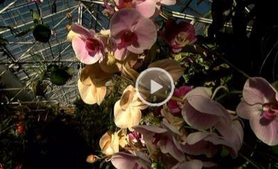 The Orchid Show: Celebrating 40 Years at Selby Gardens