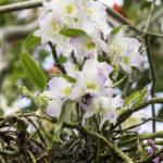orchid in tree erin fink