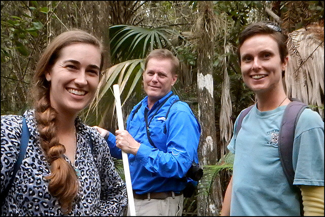 Restoring bromeliads in Fakahatchee Strand Preserve State Park