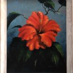 Hibiscus Harold Newton