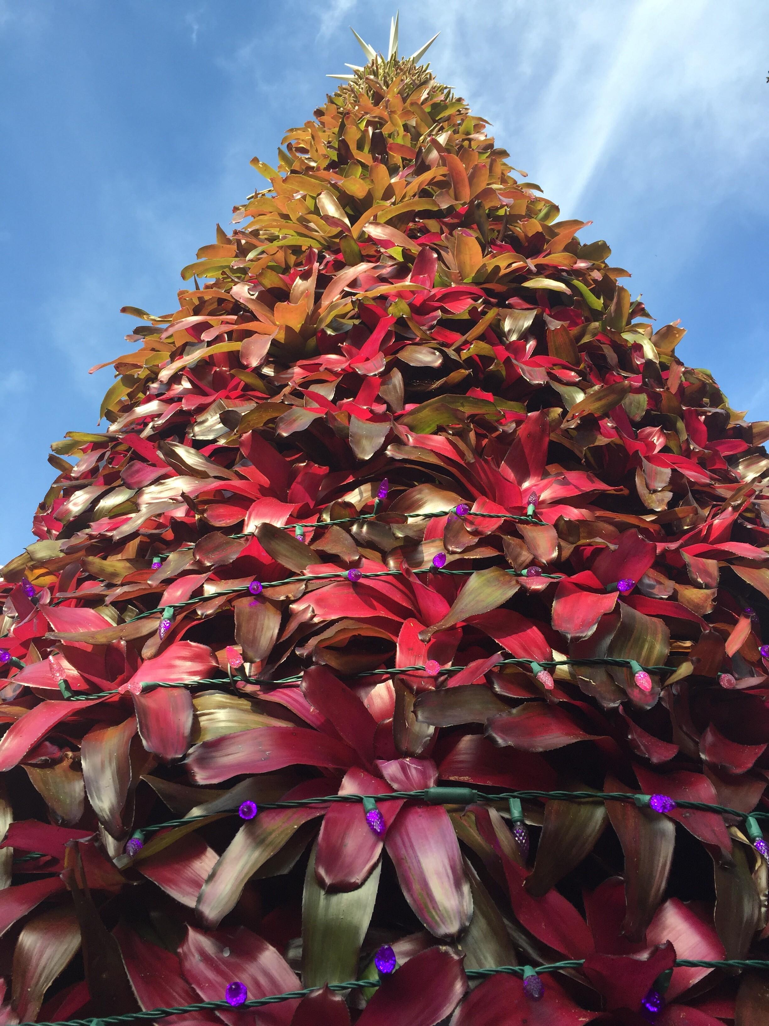 """""""O Bromeliad Tree, O Bromeliad Tree…"""""""