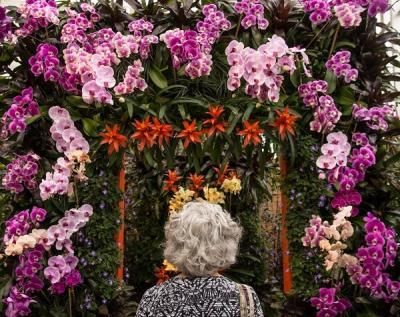 The Orchid Show: Celebrating 40 Years At Selby Gardens Drew Record Crowds  To The Botanical