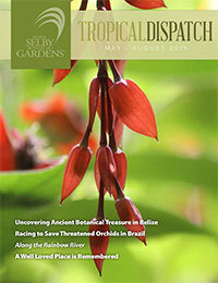 http://selby.org/wp-content/uploads/Tropical-Dispatch-May2015-cover.jpg