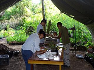 Preparing specimens at Cave's Branch Lodge  in Belmopan, Belize