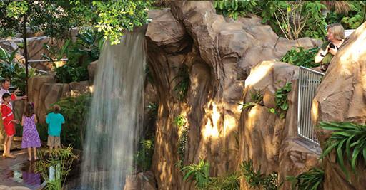 Childrenu0027s Rainforest Garden
