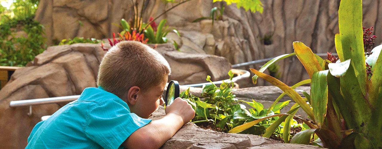 The Ann Goldstein Children's Rainforest Garden