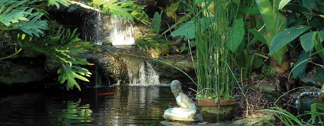 Epiphyte Garden