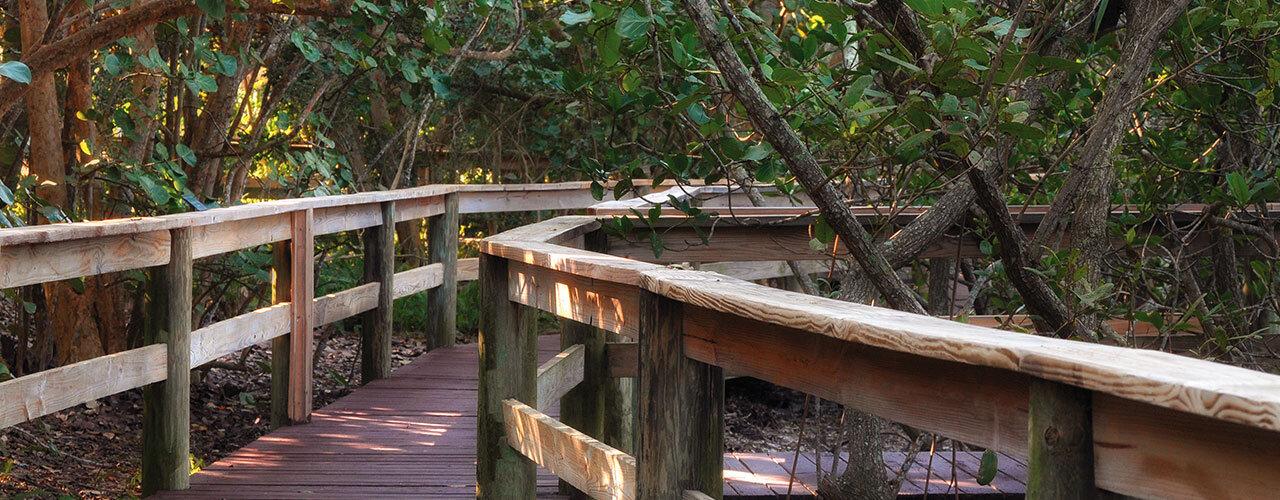 Steinwachs Family Foundation Mangrove Walkway