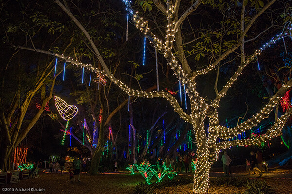 Marie Selby Botanical Gardens Lights Up The Holiday Season With Lights In  Bloom. Over One Million Lights Will Illuminate The Garden And Walkways Will  Be ...