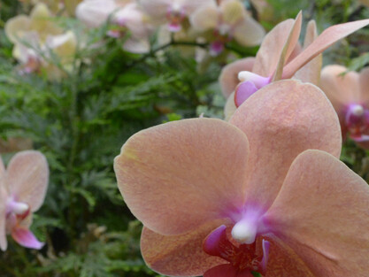 The Orchids of Selby Gardens