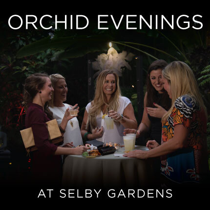 https://selby.org/wp-content/uploads/orchid-evenings2_430x430.jpg