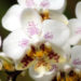The Orchid Show