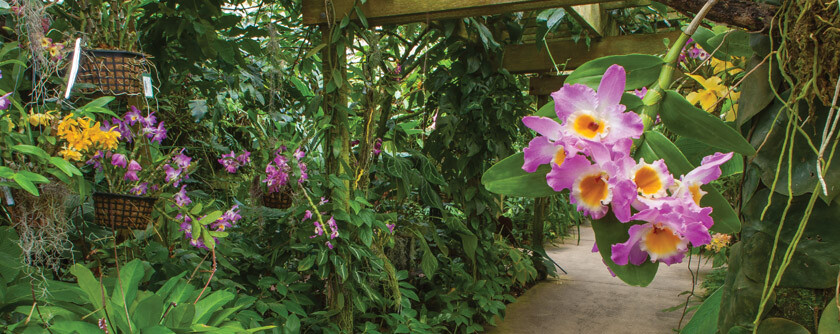 Common Varieties of Orchids