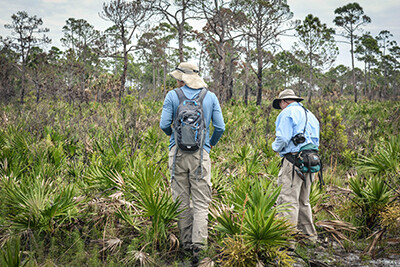 Selby Gardens Assists With Pine Island Plant Survey
