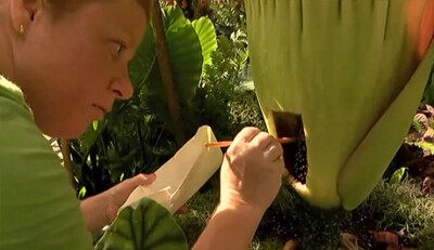 Other Gardens Interested in Selby's Corpse Plant's Pollen