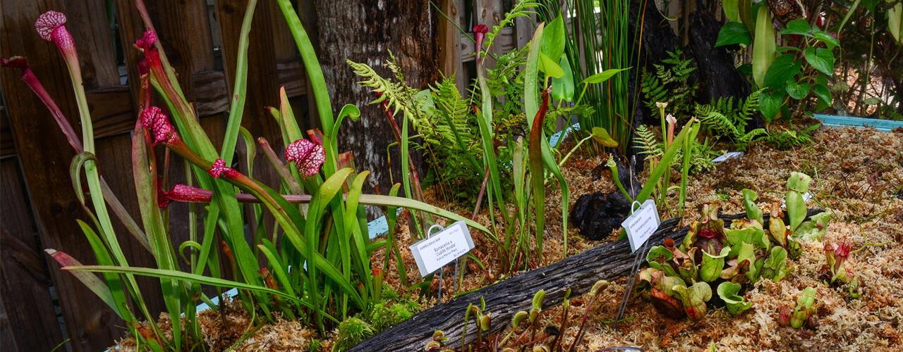 The Coleman-Lienhart Savage Garden
