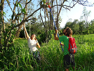 Laurie Birch and David  Troxell collecting a Trichocentrum orchid